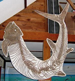 http://www.keystonegallery.com/fossils/images/xiphactinus-gallery.jpg
